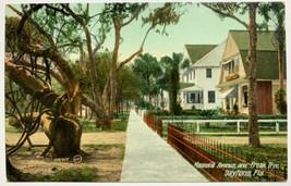 Old Divided Back Era Postcard Magnolia Avenue and Freak Tree Daytona, FL... - $19.55