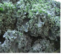 SHIPPED From US,PREMIUM SEED:300 Particles of Kale Premier, Hand-Packaged - $28.99