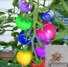 bonsai 100seeds/pack Purple Cherry Tomatoes Balcony Fruits Vegetables  - $2.99