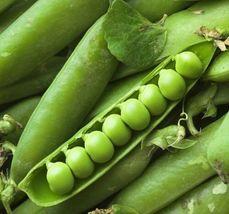 Fresh Seed Little Marvel Pea 3 Variety #IMA30 - $16.99+