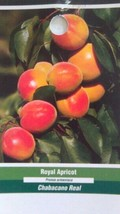 4'-5' Live Royal Apricot Tree Healthy Fruit Trees Natural Plant New Home Garden - $98.95