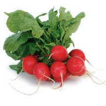 Radish Vegetable Seeds 25 Fresh Seeds Ready To Plant In Your Garden - $1.99