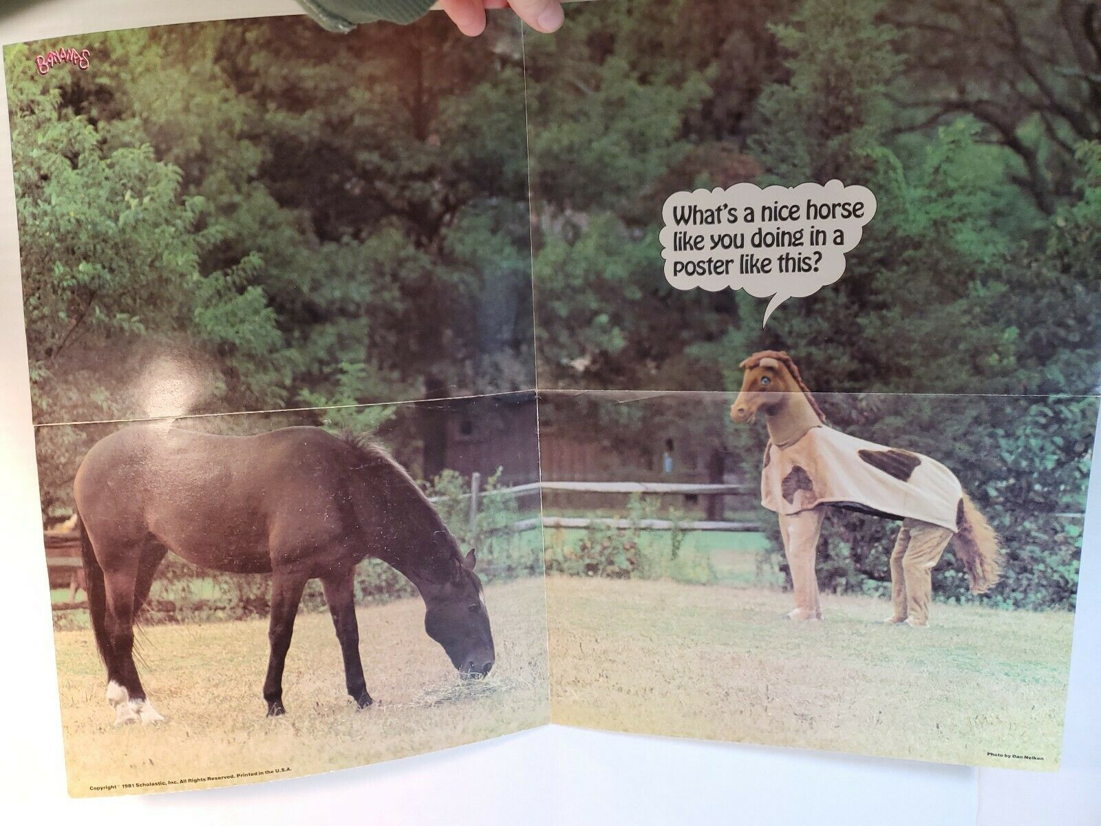"Primary image for Vintage 1981 Scholastic pin up Poster HORSE FUNNY COMEDY 21""x16"""