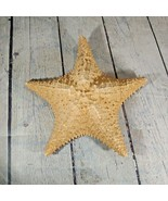 "VTG LARGE GENUINE KNOBBY STARFISH 8"" - $19.79"