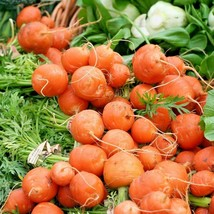 """800+PARISIAN 2""""ROUND CARROT Seeds Organic Non-Gmo Gourmet Garden/Patio C... - $4.00"""