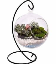 10L0L Charming Hanging Clear Glass Ball Vase Air Plant Terrarium Kit/Suc... - $26.99