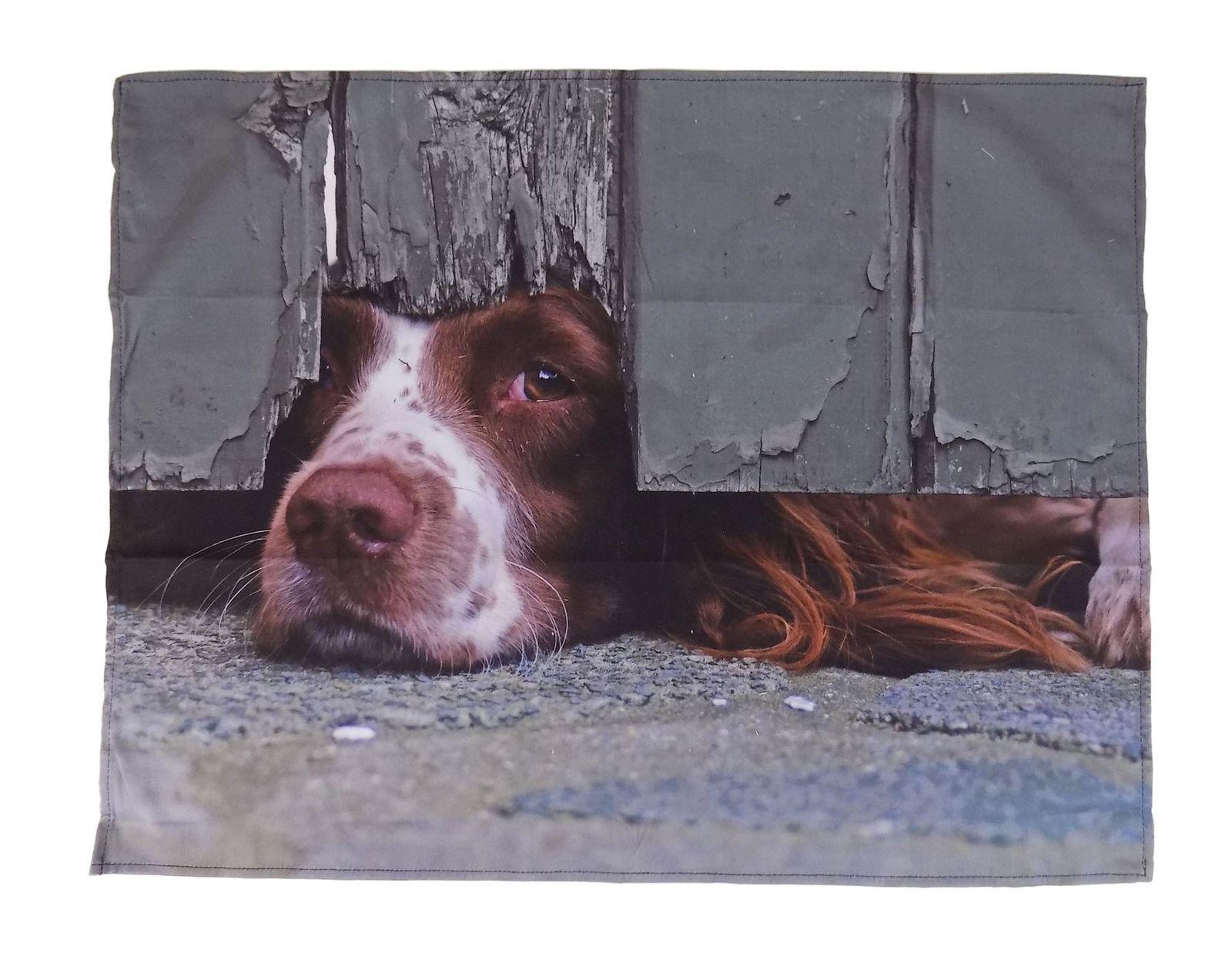 Curious Spaniel Perro 100% Algodón 88x18cm Guante Doble Horno & 55x70cm PAÑO