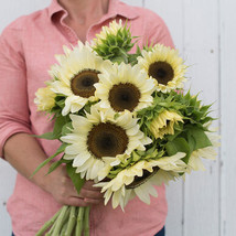 Procut White NiteSunflower Seeds, Sunflower Seeds - $24.00