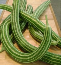 250 Seeds or 1/4 Ounce Cucumber, Armenian Yard Long, Snake Melon, NON-GMO - $6.93