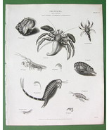 CRUSTACEA Order Cancer Crab Shrimp - 1820 Antique Print Engraving - $7.65