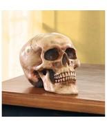 Realistic Grinning Skull Figurine Halloween Decor - $24.95