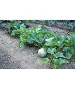 200 seeds - Hale's Best Jumbo Cantaloupe Orange Muskmelon Cucumis Melon ... - $17.99