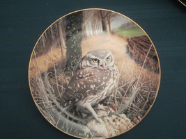 LITTLE OWL collector plate WATCHFUL EYES Trevor Boyer OWLS Danbury Mint - $19.95
