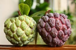5 Sugar Apple - Annona Squamosa - Rare Tropical Plant Tree Seeds - $7.50