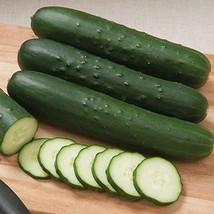 Cutter F1 Hybrid Cucumber Seeds (20 Seeds) - $2.79
