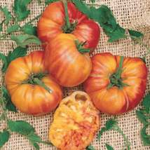 Rainbow Tomato Seeds | Big Rainbow Heirloom Tomato Seeds | 100 seeds - $16.42