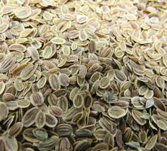 Dill Seed Whole 1 oz Culinary Herb Flavoring Cooking Baking Recipe Included - $8.91