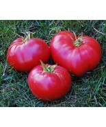 SHIP From US, 10 Seeds Mexico Tomato Seeds, DIY Healthy Vegetable AM - $18.99