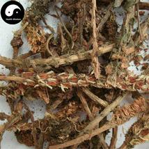 Wa Song 瓦松, Herba Orostachyos, Fimbriae Orostachys, Wa Hua, Xiang Tian Cao 100g - $13.99
