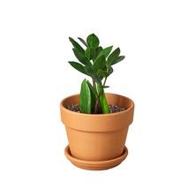 """1 Live Plant - Zamioculcas Zamiifolia ZZ 4"""" Pot #HPS13 - $65.99"""