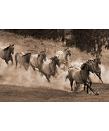 Leader of the Pack by Robert Dawson Canvas Giclee Running Herd Of Wild H... - $246.51