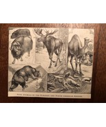 """Vintage Engraving Print of NORTH AMERICAN Animals Unframed 3.5"""" x 4.25"""" - $7.25"""
