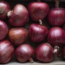 Rossa di Milano Organic Onion Seed , Vegetable Seeds,Ship From US - $17.00