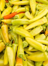 Pepper Hungarian Hot Wax Yellow Non GMO Heirloom Vegetable Seeds Sow No ... - $1.97+