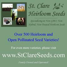 Asparagus - UC 72 - Non-Hybrid - Non-GMO - St. Clare Heirloom Seeds - $1.99
