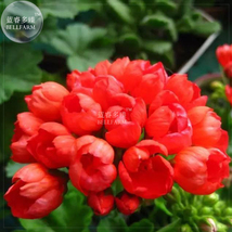 Best Price 20 Seeds Apple Blossom Bonsai Flower,Diy Flower Seeds QC061M Dg - $7.18