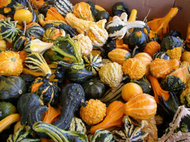 8 Variety Seeds - Gourd Large and Small Mix Seeds #SMS60 - $12.99+