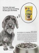 Schnauzer Puppy Dog 2002 Pedigree Little Champions Dry Food Photo Ad - $10.99