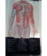 Atlas of the Human Body in Trans-Vision.  Better Homes & Gardens Vintage... - $10.00