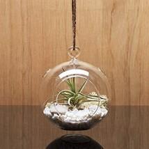 WGV Plant Terrarium/Hanging Candle Holder, Round Base with 1 Hook 6 Pcs - $28.51