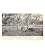 Wildwood NJ Cape May County The W Tree 1906 World Postcard Co Duplex Cancel - $4.95