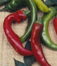 150 Organic Anaheim Mild Hot Chili Pepper Seeds NON-GMO Heirloom - $1.79