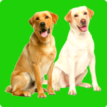 JOINT PAIN RELIEF - SMALL, MEDIUM & LARGE DOGS - INFLAMMATION ARTHRITIS ... - $35.00