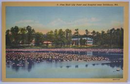 PINE BLUFF LILY POND & HOSPITAL NEAR SALISBURY, MD POSTCARD - POST 1952 - $3.49