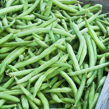 Bean Seeds - Bush - Jade (Treated) - Vegetable Seeds - Outdoor Living - Garden - $37.99+