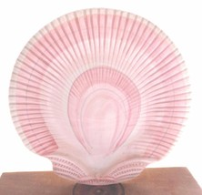 Vintage Fitz and Floyd Dimensional Shell Plate Peachy Pink 1981 - $19.00