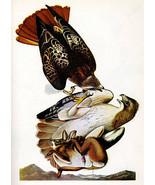 Audubon Red-Tailed Hawk 15x22 Hand Numbered Ltd. Edition Art Bird Print - $46.19