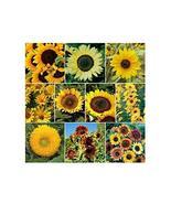 100 Seeds Sunny Sunflower Mix 10 Species of Wildflower Seeds TkSmartbuy - $28.71