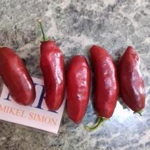 Habanero Chocolate Long,10 semillas,seeds,Capsicum chinense,cosecha prop... - $2.22