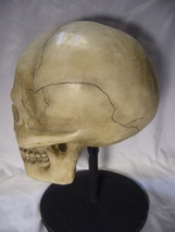 Bethany Lowe Bone Head Skull for Halloween no. TD0570 image 4