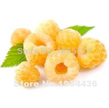 4000Pcs Raspberry Bonsai Mixed Colors Super Big Raspberry Fruit For Flow... - €2,75 EUR