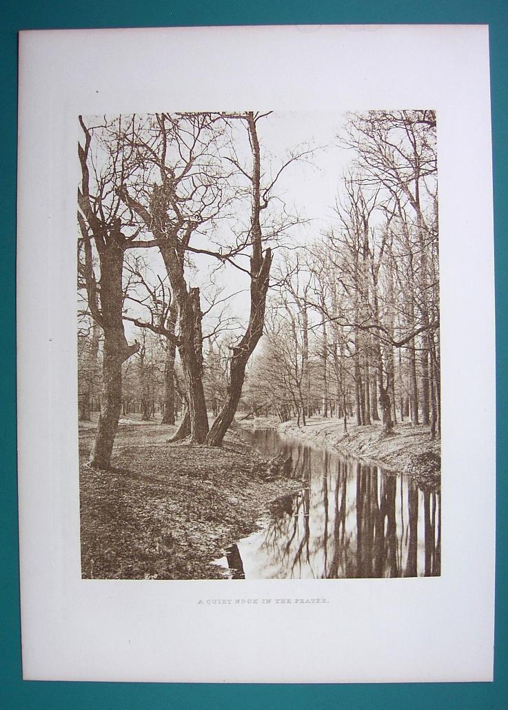 AUSTRIA Vienna Forest Solitude at Prater - 1880s Photogravure Antique Print