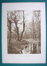 AUSTRIA Vienna Forest Solitude at Prater - 1880s Photogravure Antique Pr... - $13.49