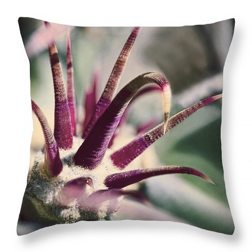 Cactus Crown of Thorns, Throw Pillow, fine art, home decor, accent pillow