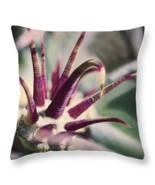 Cactus Crown of Thorns, Throw Pillow, fine art, home decor, accent pillow - $41.99+