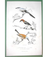 BIRDS Grey Magpie Woodchat & Red Shrike - 1860s COLOR Print by Buffon - $14.92